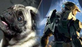 Η 343 Industries προσέλαβε pug για το Halo Infinite