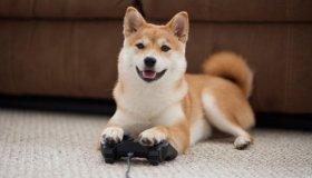 Το Watch Dogs Legion δεν θα έχει σκυλιά γιατί η Ubisoft δεν ήθελε αδέσποτα παντού